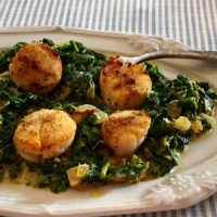 Seared scallops on a bed of creamed spinach
